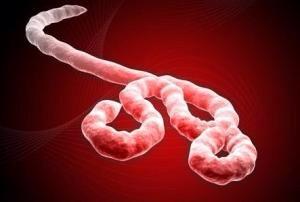 Dominio ebola.com vendido por 200.000 dólares.